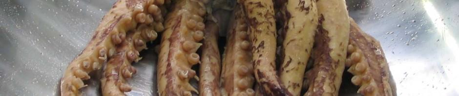 Гигантский кальмар или архитеутис (лат. Architeuthis)