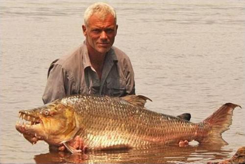 Одна из самых страшных рыб в мире, которая обитает в
