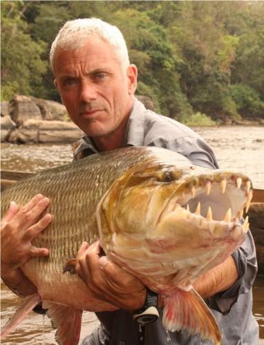 Тигровая рыба голиаф лат hydrocynus goliath