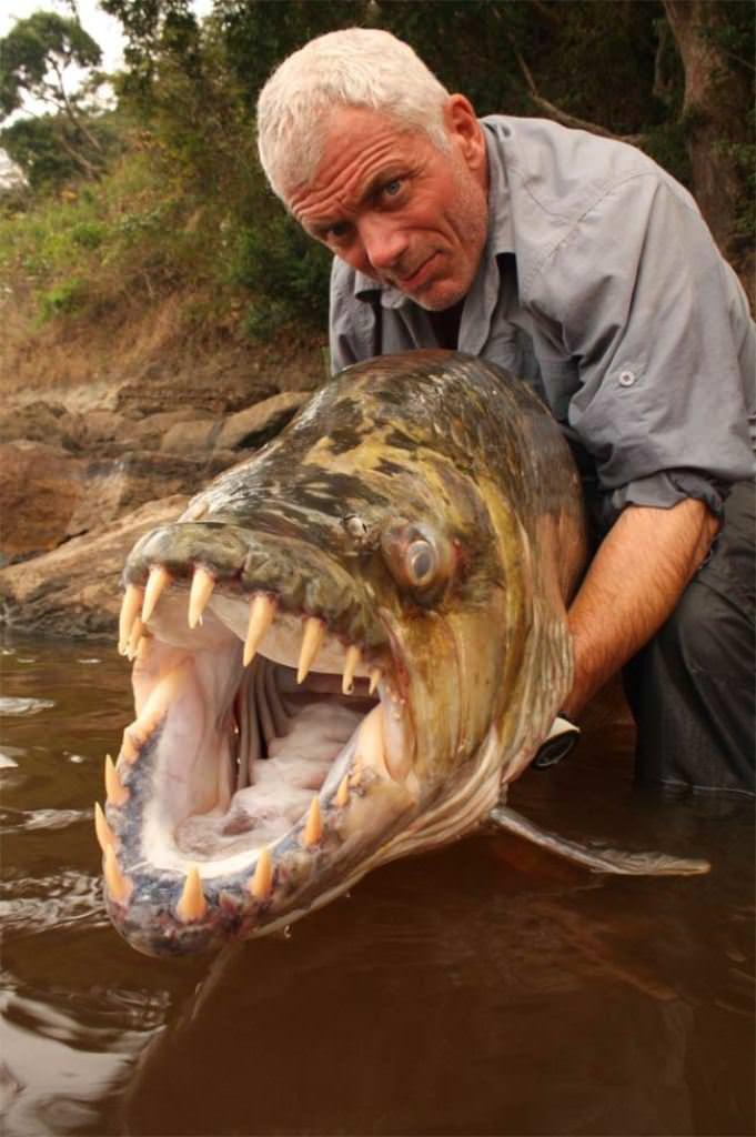 кораблик для рыбалки купить carphunter gold алиэкспресс