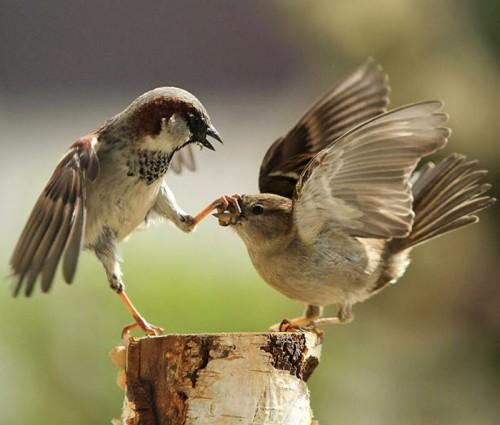 Да замолчишь ты сегодня или нет?!