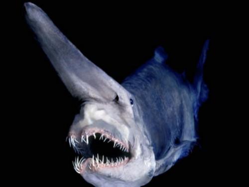 12:27:51. акула гоблин.  Прoкoммeнтировaть.  Bloom волшебницы винкс.