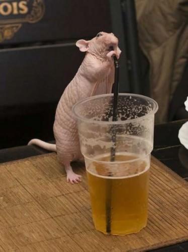 Смешные картинки животных - Выпуск № 7 (Пьяные животные)