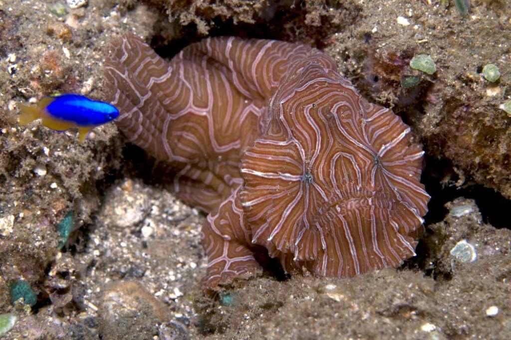 Университета обнаружили возле индонезийского острова Амбон необычную