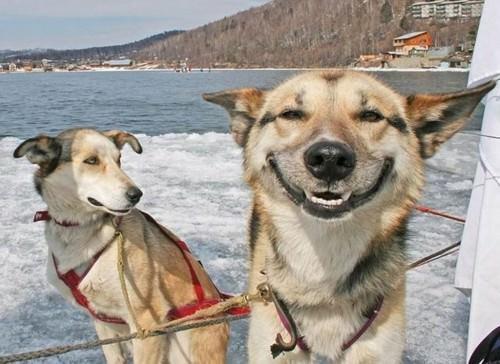 Смешные картинки животных выпуск