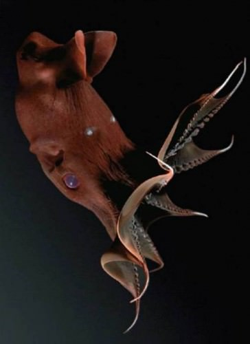 ������ ������ ��� ������ �������-������ (���. Vampyroteuthis infernalis) (����. Vampire Squid)
