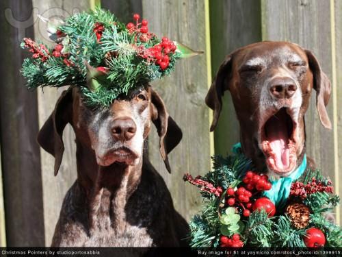 Смешные картинки животных - Выпуск № 12 (Новогодний)