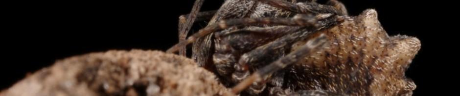 assassin spider01