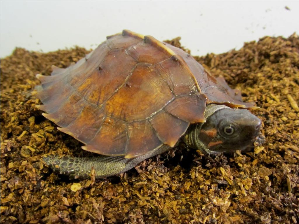 Черепахи в воде в домашних условиях