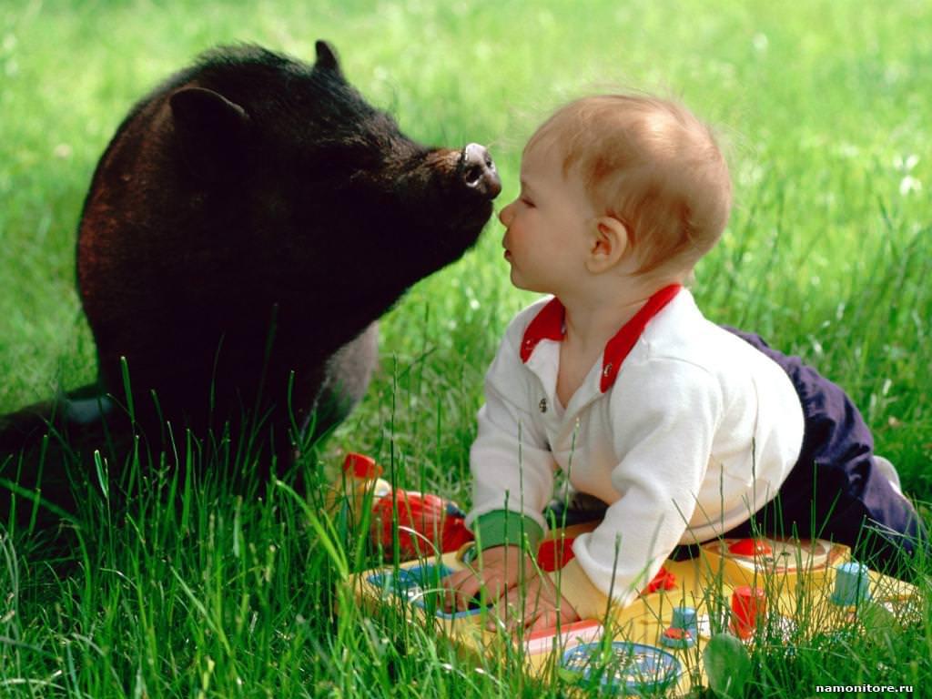 Животных выпуск № 13 животные и дети