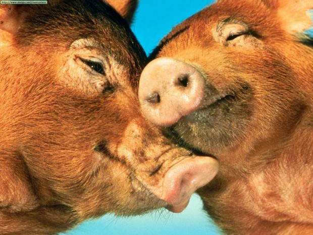 Смешные картинки животных - Выпуск № 15 (Любовь зверей)