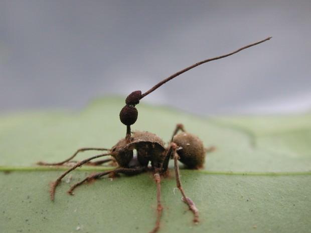 Гриб-паразит не может расти на земле, и не может расти