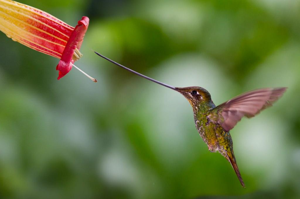 Kolibri Pictures To Pin On Pinterest