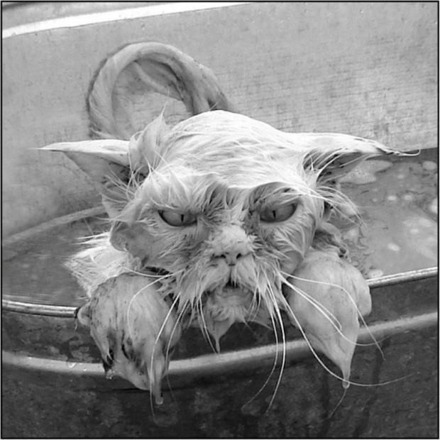 Смешные картинки животных - Выпуск № 20 (Мокрые коты)