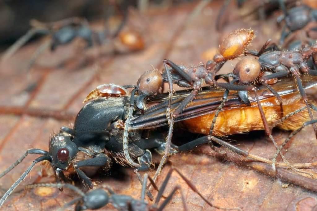 Животные убийцы фото 5