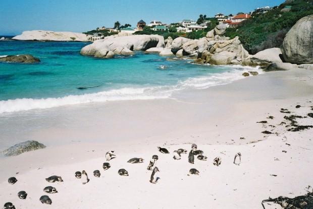 Пингвины (лат. Spheniscidae) (англ. Penguin)