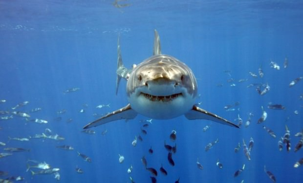 Акулы (подборка фото)