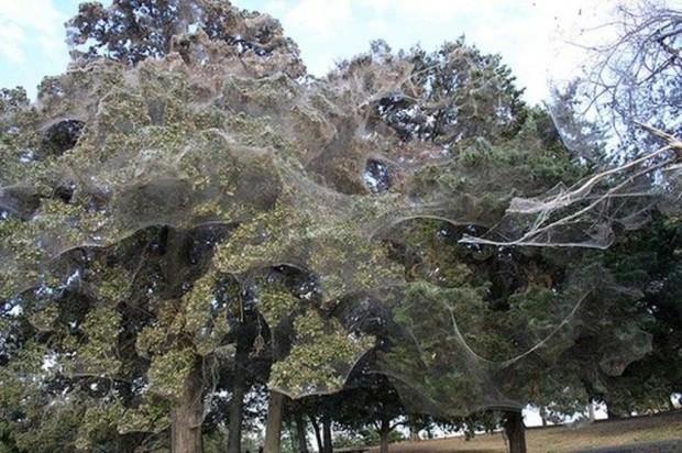 Паутинный лес в парке Wind Point Park, штат Техас
