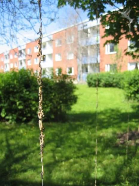 Деревья в паутине