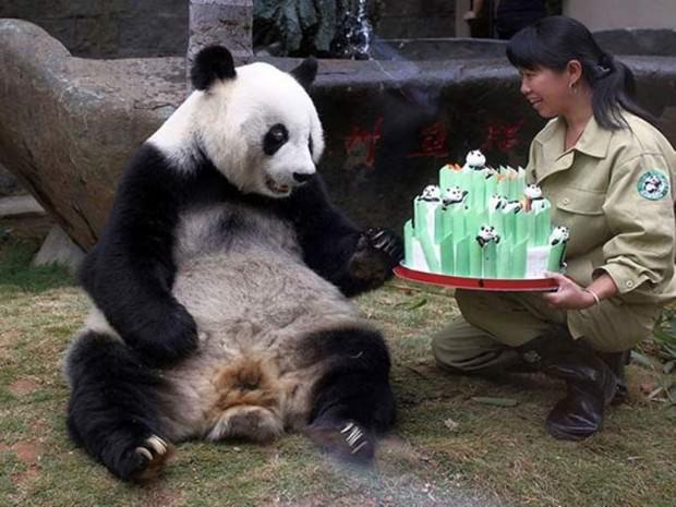 Смешные картинки животных - Выпуск № 28 (С Днем Рождения!)