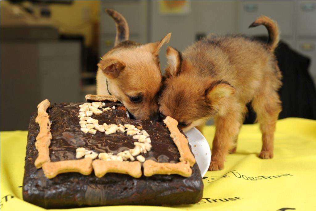 Открытка с днем рождения с животными прикольными 94