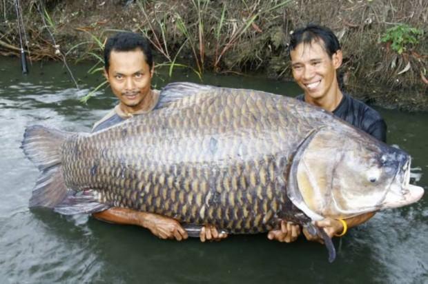 85. рыба.  Share on Tumblr. голосов: 1). Ключевые теги. рыбалка.  Tweet.