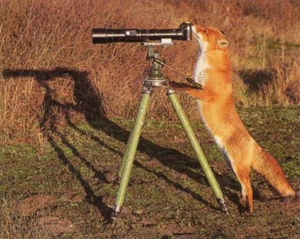 Смешные картинки животных - Выпуск № 30 (Животные-фотографы)