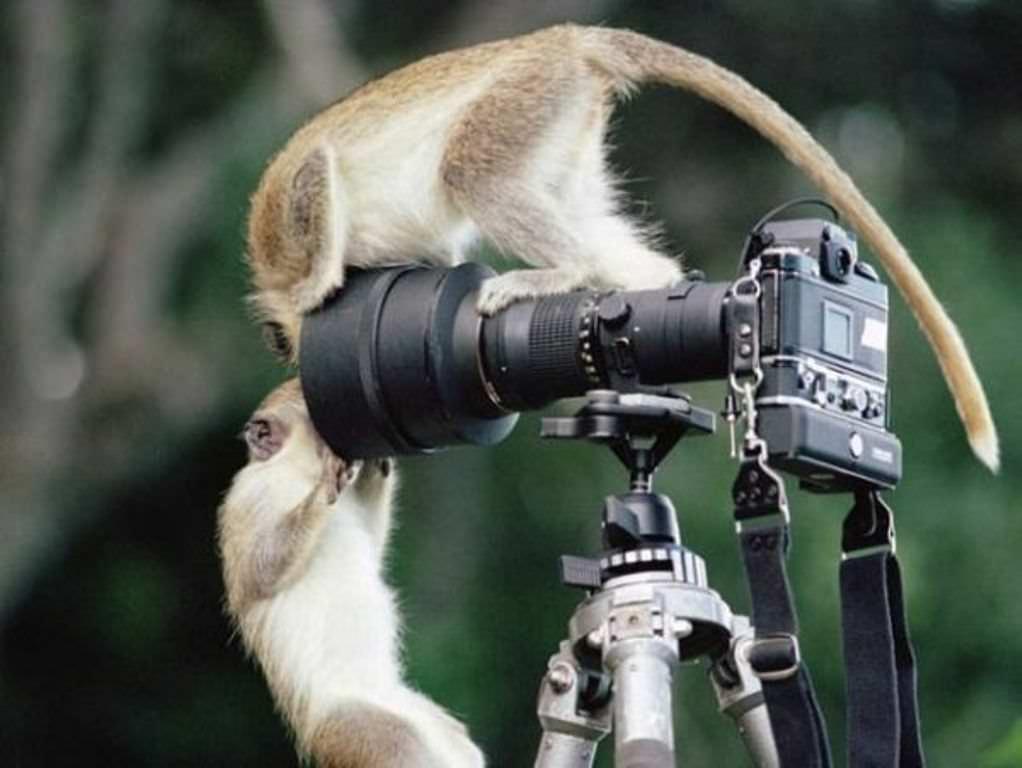 Порнушка смотреть онлайн фантастика со зверьми 14 фотография