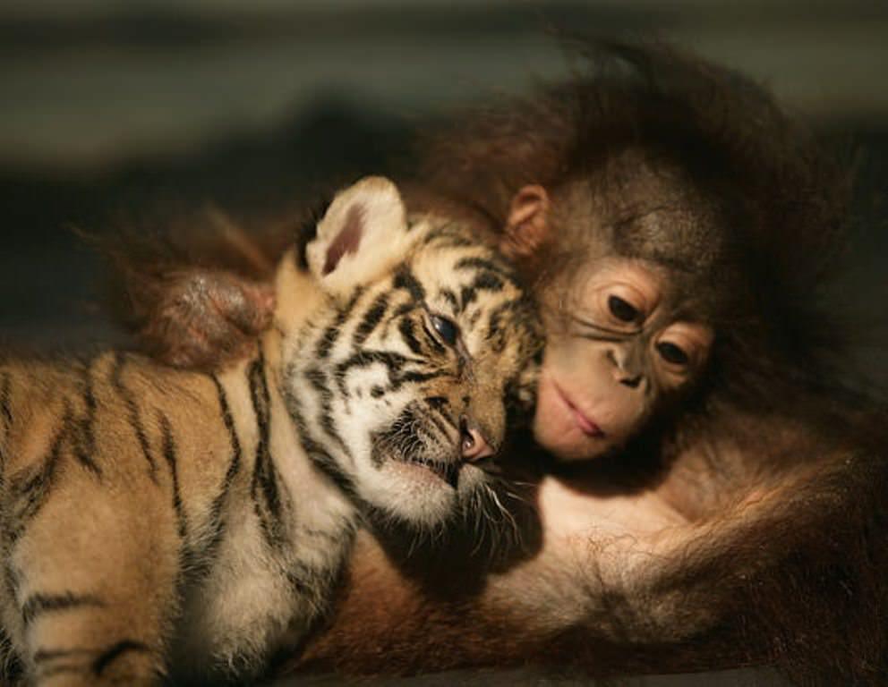 Смешные картинки животных выпуск 31