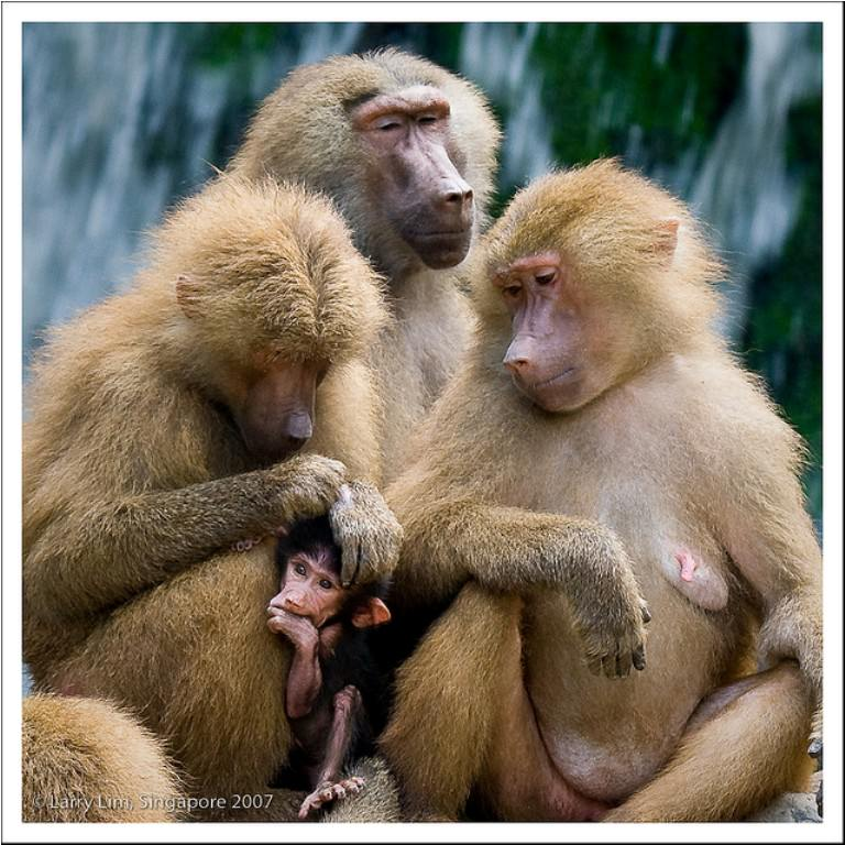 Картинки животных красивые - 67c55