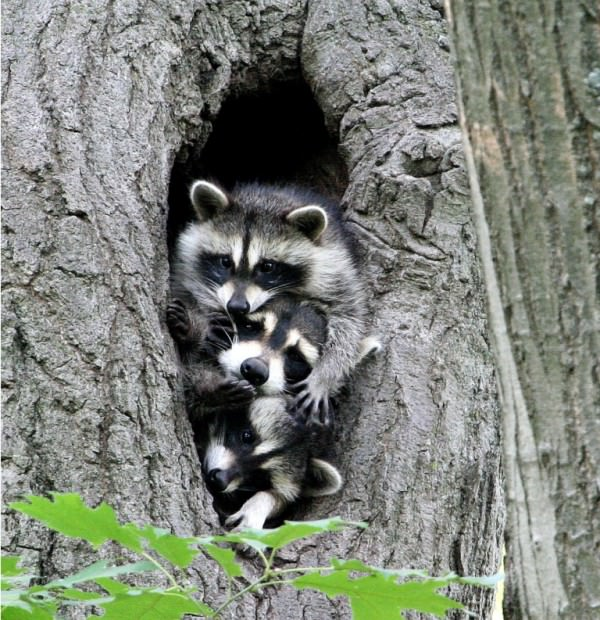 Смешные картинки животных - Выпуск № 32 (Счастливое семейство)