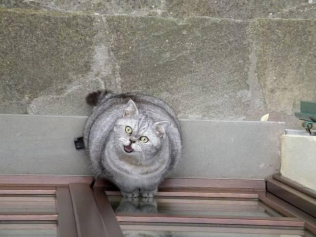 Смешные картинки животных - Выпуск № 33 (Жирные коты)