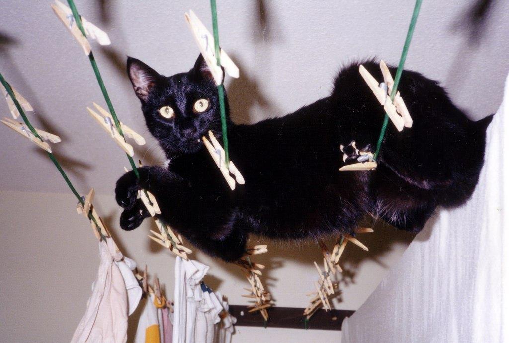 Животных выпуск 34 черные коты