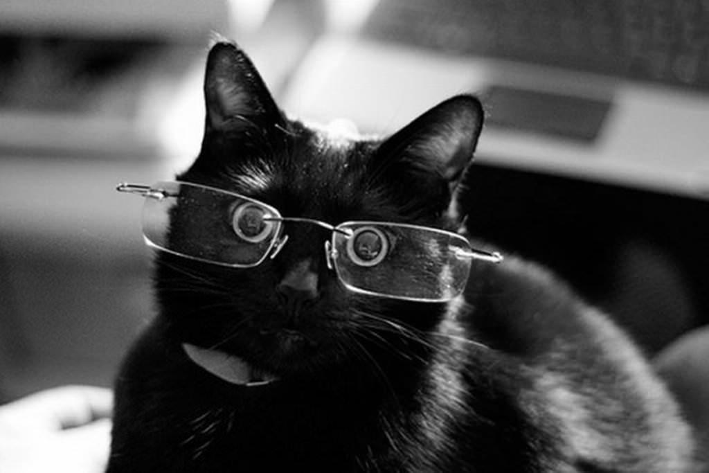 Картинки по запросу смешной черный кот