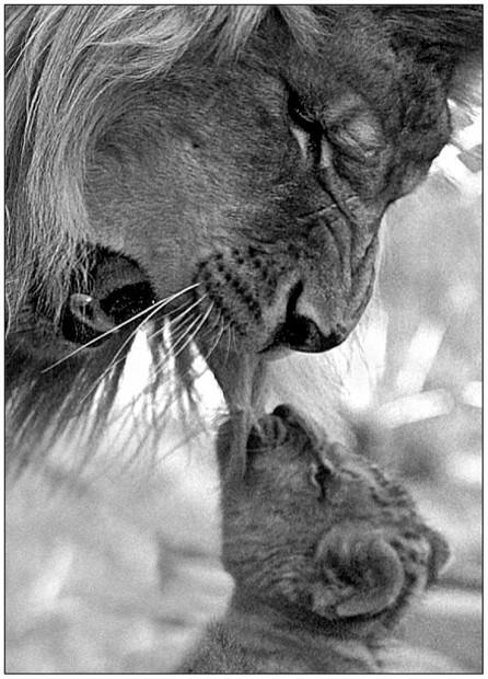 Смешные картинки животных - Выпуск № 35 (Забавные детеныши)