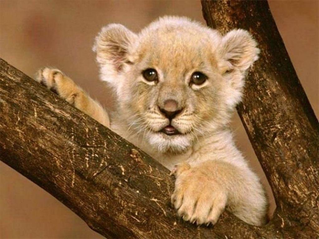 Картинки животных красивые - f09b