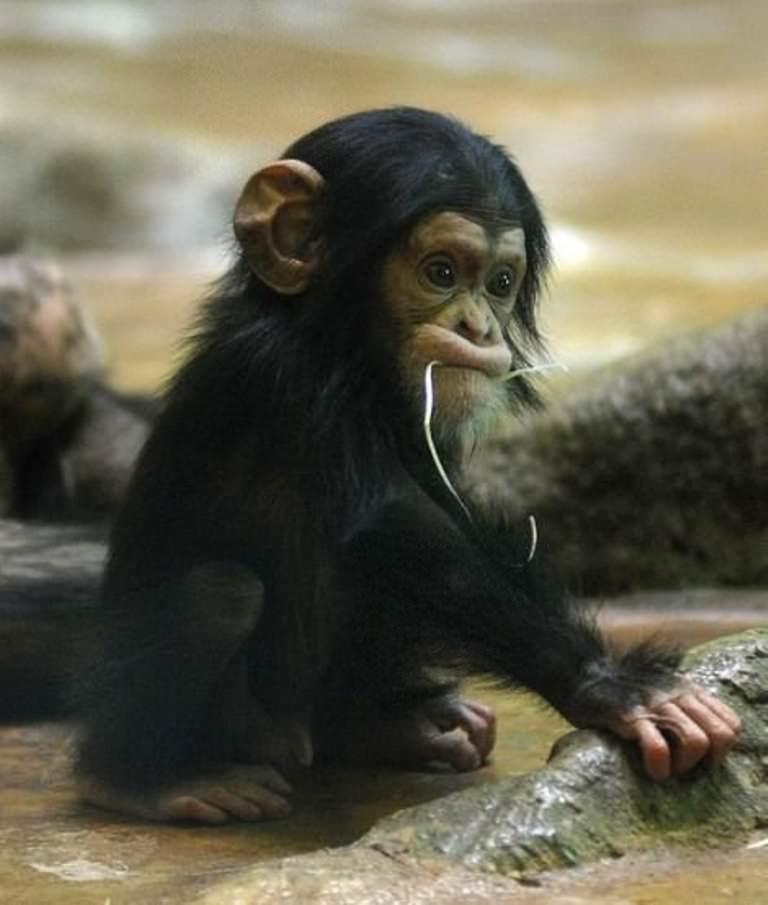 Смешные картинки животных выпуск 35