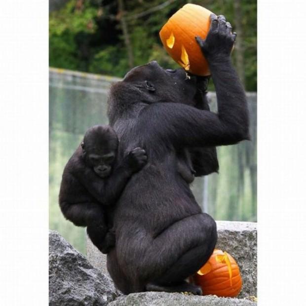 Смешные картинки животных - Выпуск № 38
