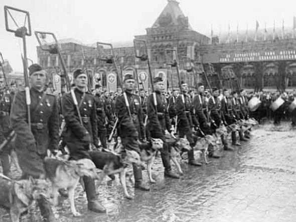 Животные знаменитости. Часть 5. Собаки – герои Великой Отечественной войны.