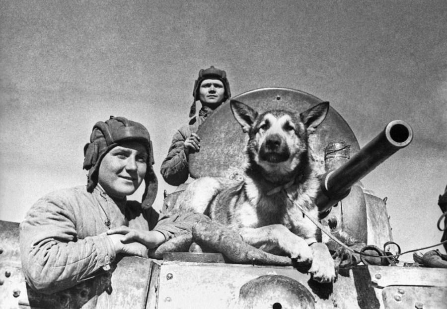 Животные знаменитости часть 5 собаки