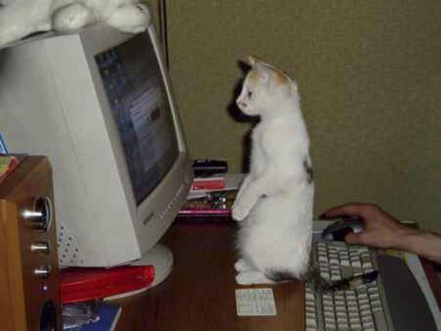 Смешные картинки животных — Выпуск № 46 (Кошки за компьютером)