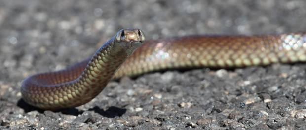 Топ-20 самых опасных животных Австралии. Часть 3.