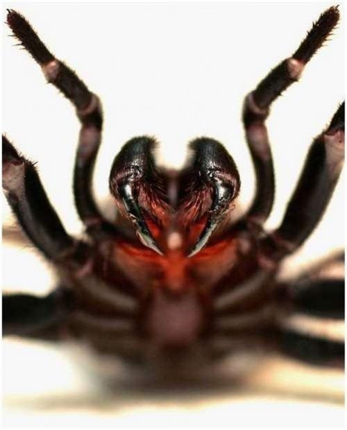 Топ-20 самых опасных животных Австралии. Часть 4.