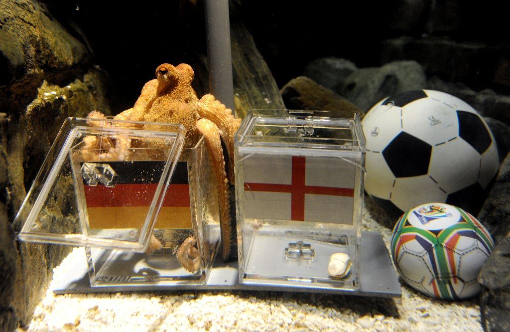 Животные-оракулы предсказали победителя в матче Украины и Германии.