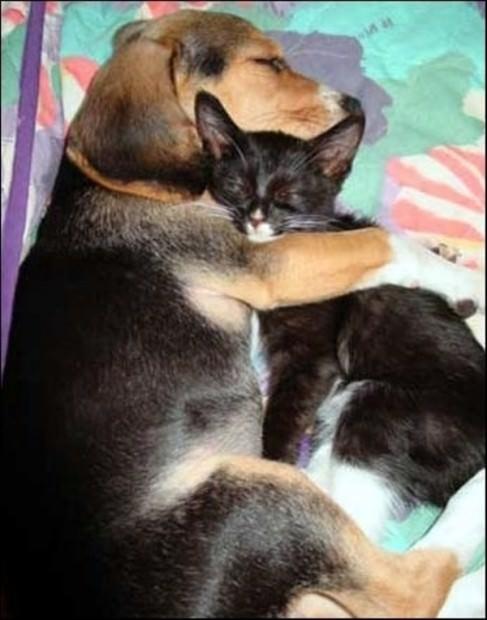 Animal hugs Skzh-46-04-487x620