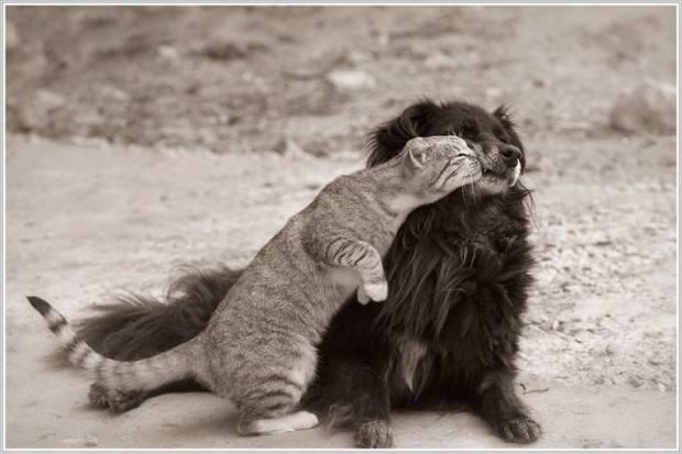 Смешные картинки животных – выпуск