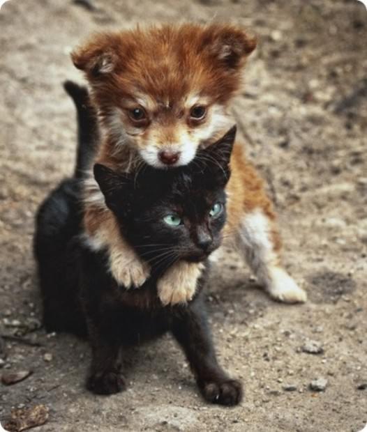 Animal hugs Skzh-46-11-526x620