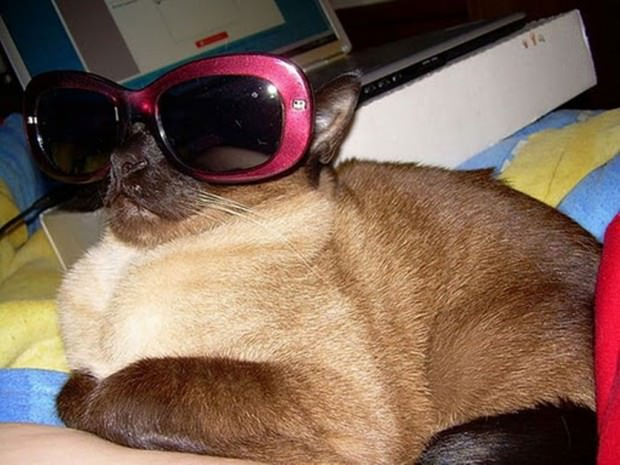 Смешные картинки животных - Выпуск № 51 (Коты в очках)