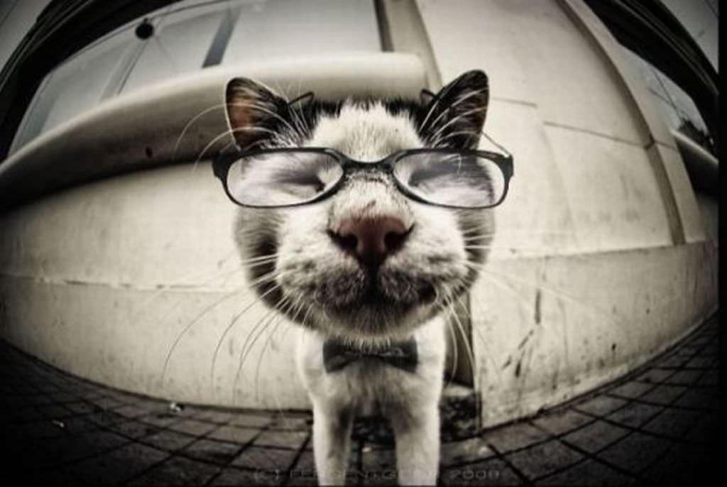 прикольные аватарки с котами: