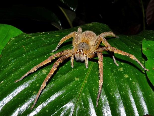 Самые опасные животные Амазонии. Часть 2.